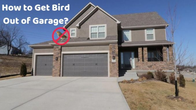 How to Get Bird Out of Garage