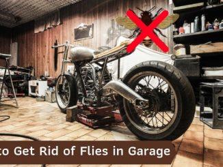 How to Get Rid of Flies in Garage