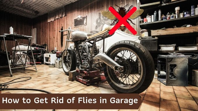 How to Get Rid of Flies in Garage